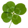 four-leaf-clover_med